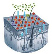Neurodermitis Wirkungsweise 2