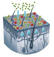 Neurodermitis Wirkungsweise 3