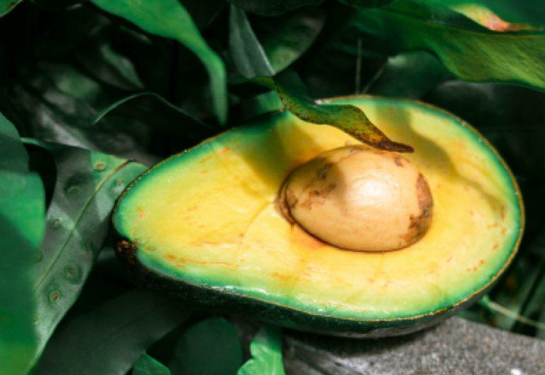 IBIOTICS-Inhaltsstoff-Avocadooel